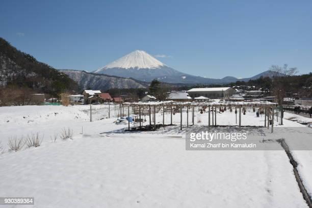Mt Fuji and snowy field