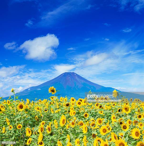 Mt Fuji and sunflowers