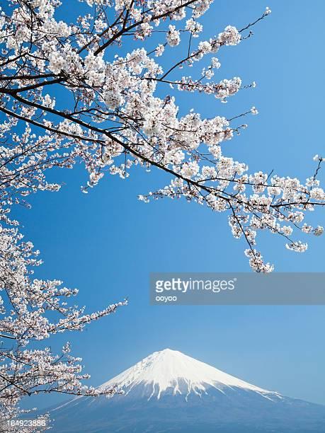桜、富士山&