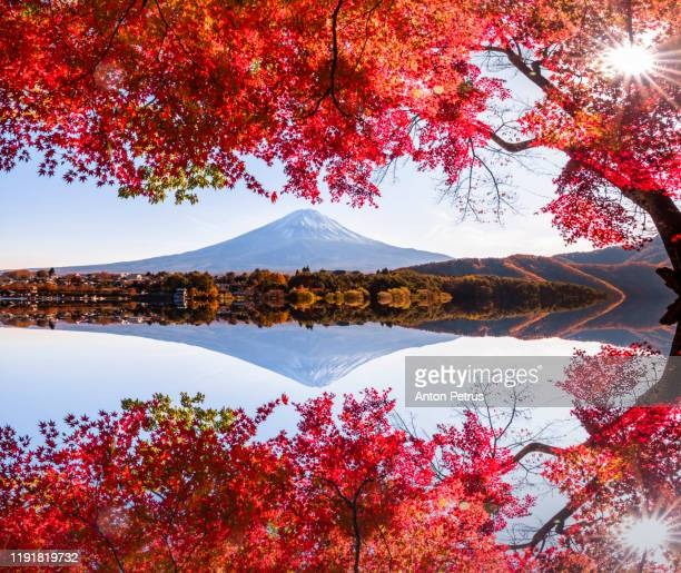 mt. fuji in autumn at sunset at lake kawaguchiko, - show garden stock pictures, royalty-free photos & images