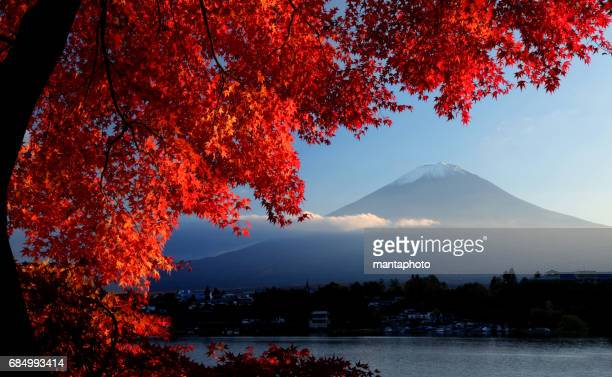mt. fuji in autumn - mount fuji stock photos and pictures