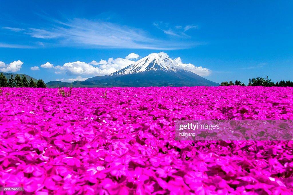 Mt. Fuji in May : Foto stock