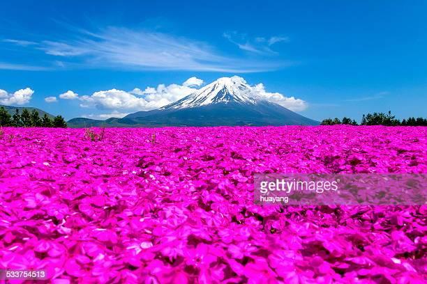 Mt. Fuji in May