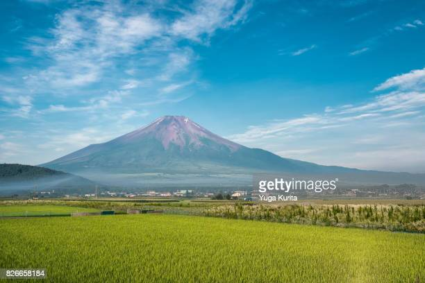 mt. fuji over rice fields in summer - yamanashi prefecture stock pictures, royalty-free photos & images