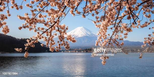 mt fuji panoramic and cherry trees, fuji five lakes, japan - paisajes de japon fotografías e imágenes de stock