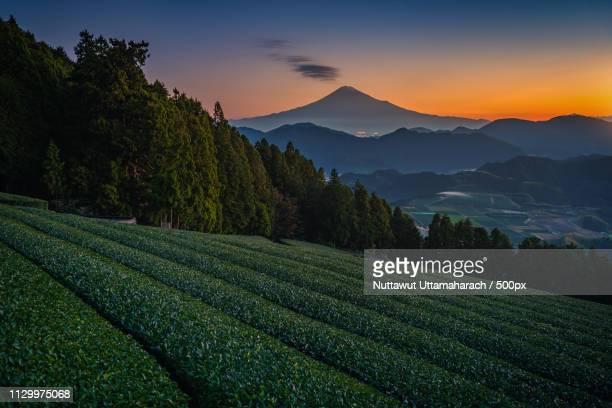 Mt Fuji With Green Tea Field At Sunrise In Shizuoka, Japan