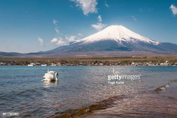 mt. fuji with swans - fuji hakone izu national park stock photos and pictures