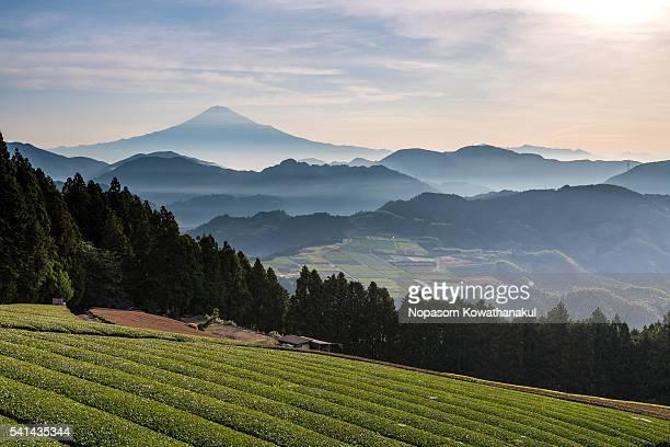 mt. fuji with tea crop valley - 静岡県 ストックフォトと画像