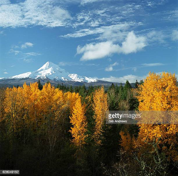 mt. hood and fall foliage, oregon - mt hood stock pictures, royalty-free photos & images