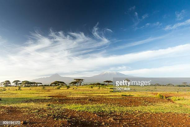 mt kilimanjaro & mawenzi peak and acacia - morning - afrika stockfoto's en -beelden