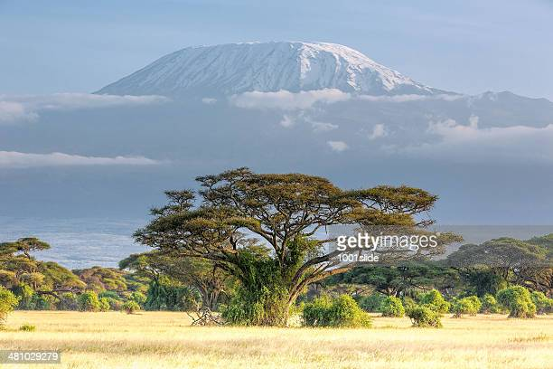 Mt Kilimanjaro, clouds and Acacia - in the morning
