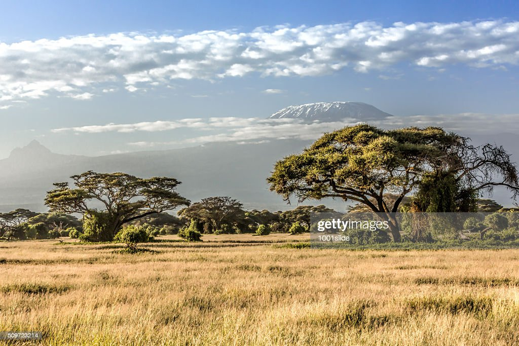Mt Kilimanjaro, clouds and Acacia tree - in the morning : Stock Photo