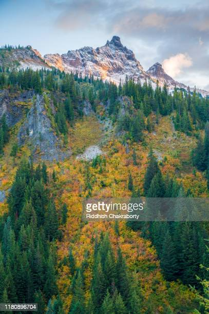 mt rainier fall foliage - cascade range stock pictures, royalty-free photos & images