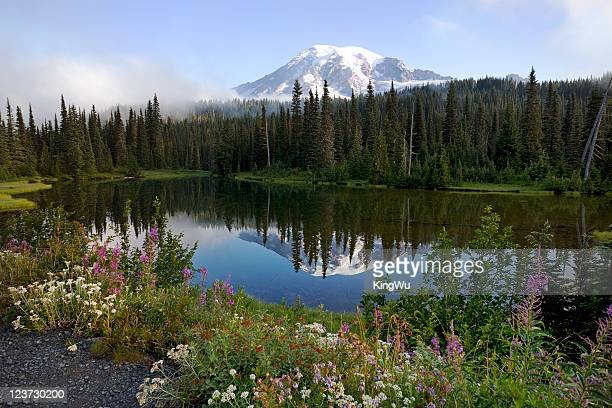 mt. rainier - reflection lake stock pictures, royalty-free photos & images