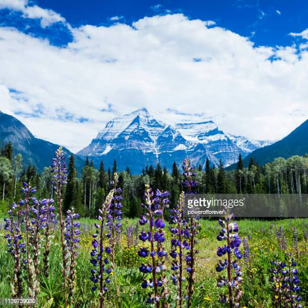 mt robson in the canadian rocky mountains of british columbia, canada - canadian rockies stock pictures, royalty-free photos & images