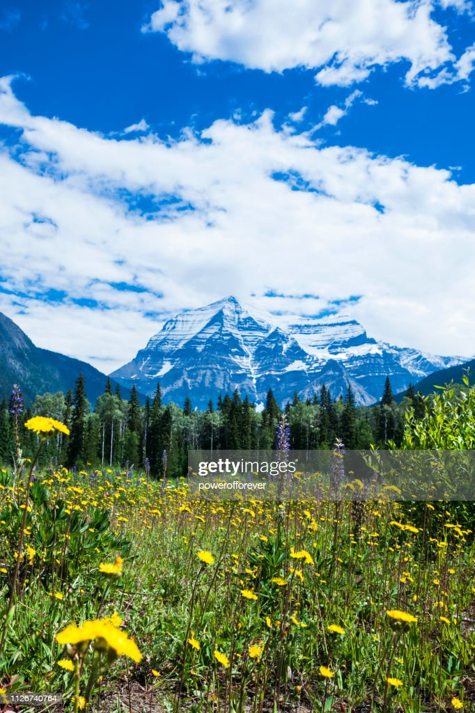 Mt Robson in the Canadian Rocky Mountains of British Columbia, Canada : Stock Photo
