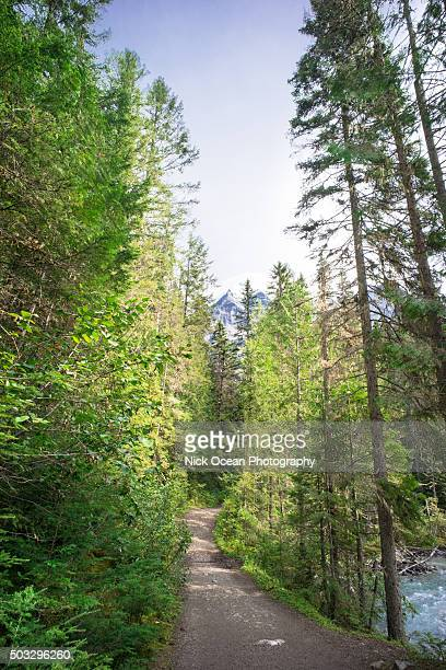 mt robson provincial park, alberta, canada - stoking stock pictures, royalty-free photos & images