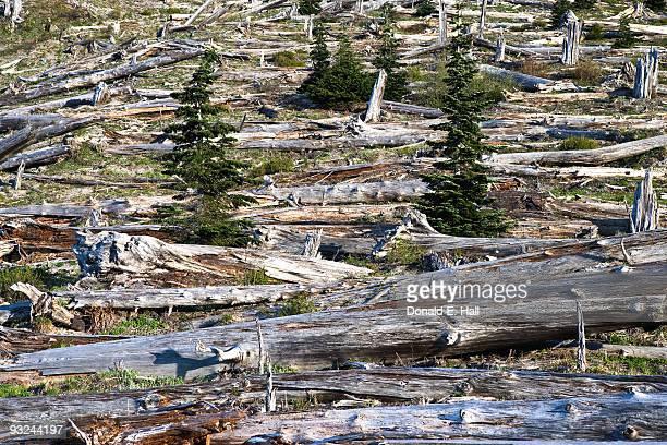 Mt. St. Helens Volcanic Destruction