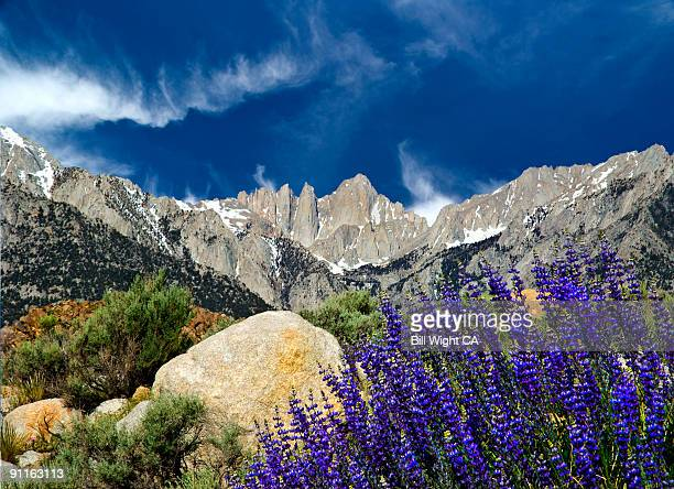mt whitney and lupine - lone pine california stock pictures, royalty-free photos & images