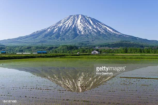 Mt Yotei mirrored in rice field