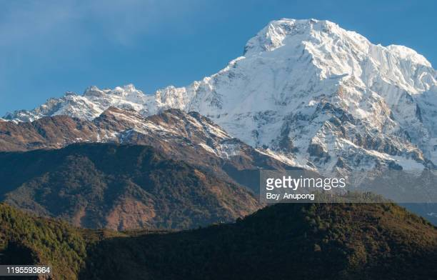 mt.annapurna south (7,219 m) view from chomrong village in annapurna sanctuary, nepal. - annapurna south stock pictures, royalty-free photos & images