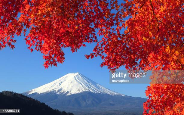 mt.fuji in autumn - mt fuji stock photos and pictures