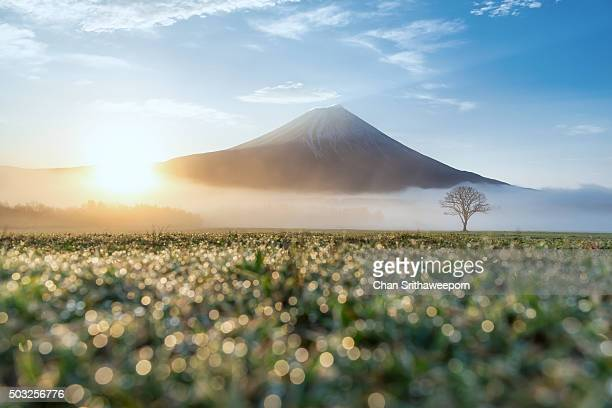 mt.fuji, japan - four seasons stock pictures, royalty-free photos & images