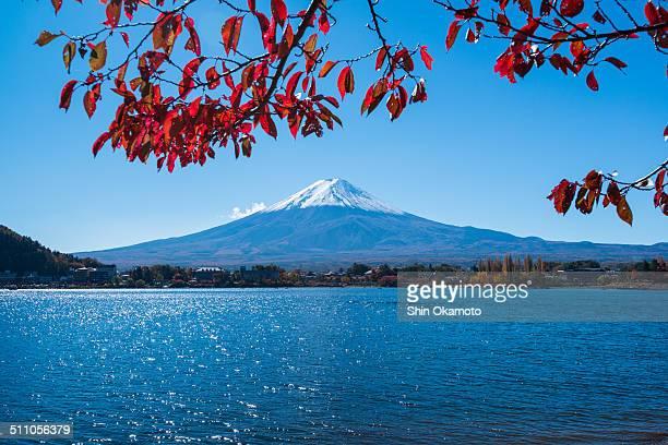 Mt.Fuji with autumn leaves