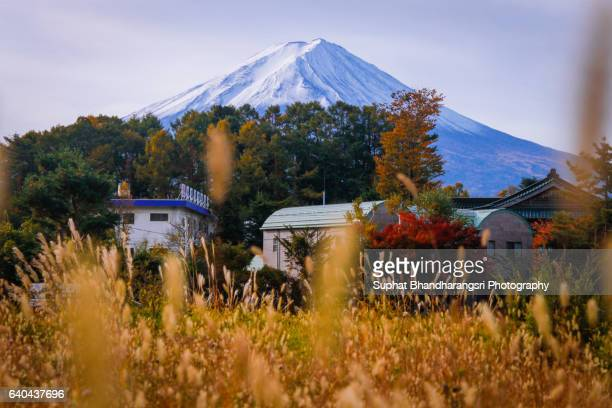 Mt.Fuji with the Feel (field) of Autumn