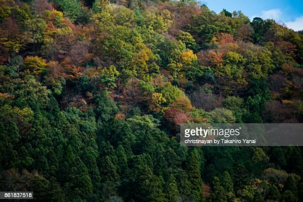 Mt.Hieizan