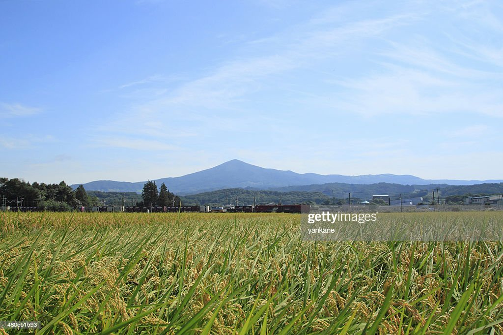 Mt.Himekami and Landscape of rice field : Stock Photo