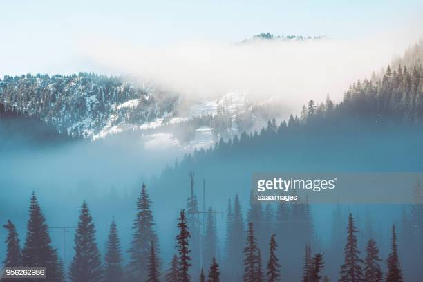 Mt.rainier with pine forest in the fog