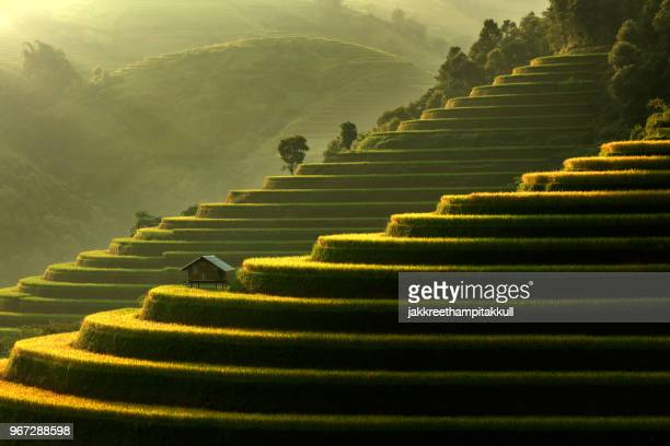 mu cang chai terraced rice field near sapa, vietnam - sapa stock pictures, royalty-free photos & images