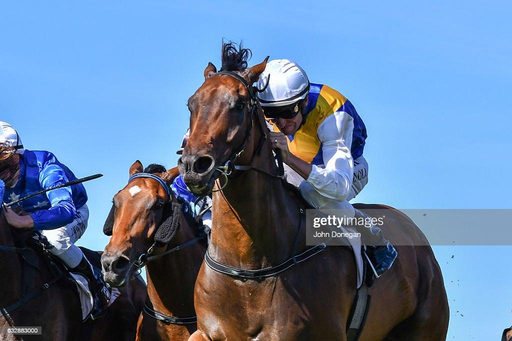 Mubakkir ridden by Steven Arnold wins the Patrobas Handicap at Flemington Racecourse on January 28, 2017 in Flemington, Australia.