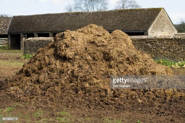 Muck heap on a dairy farm in Sherborne Gloucestershire United Kingdom