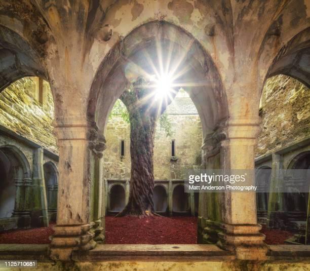 muckross abbey courtyard - abadia mosteiro - fotografias e filmes do acervo