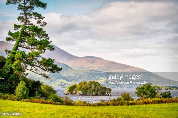 muckross park - ring of kerry stock photos and pictures