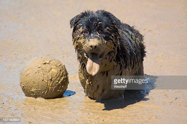 Mud Vollyball