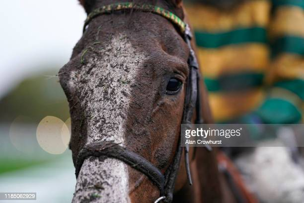 Muddy day at Ascot Racecourse on November 02, 2019 in Ascot, England.