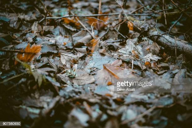 Muddy leaves