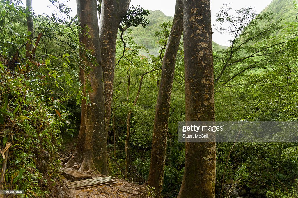 Muddy rainforest trail : Stock Photo
