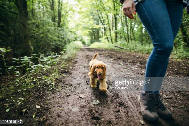 muddy walk in the forest - rural scene stock pictures, royalty-free photos & images