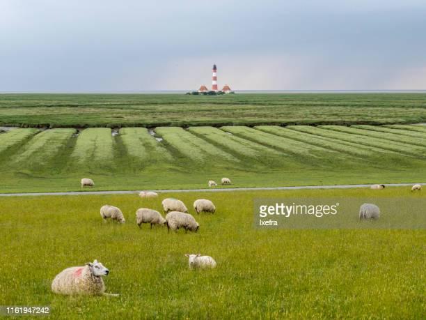 mudflat, coastal wetlands of nordfriesland, westerhever, schleswig-holstein, north sea coast - schleswig holstein stock-fotos und bilder