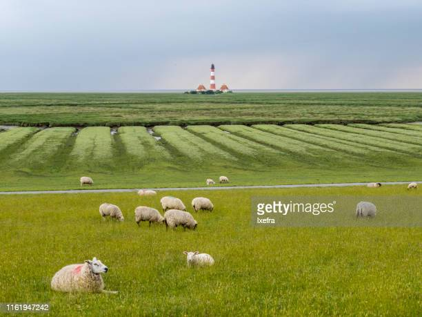mudflat, coastal wetlands of nordfriesland, westerhever, schleswig-holstein, north sea coast - schleswig holstein stock pictures, royalty-free photos & images