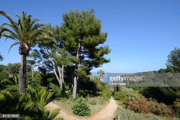 mugel botanical gardens la ciotat provence - ラシオタ ストックフォトと画像