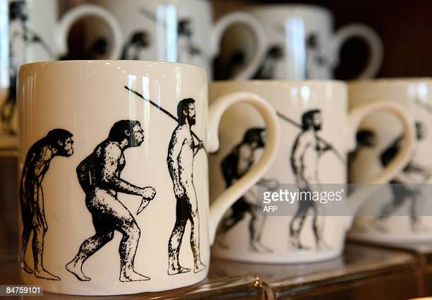 Mugs depicting evolution of man are pictured at British naturalist Charles Darwin's home Down House in Bromley Kent on February 12 2009 Darwin moved...