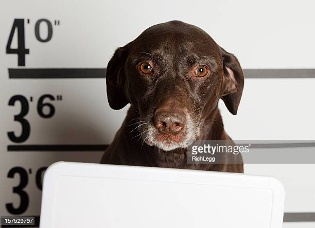 mugshot of a dog - dog cruelty stock pictures, royalty-free photos & images