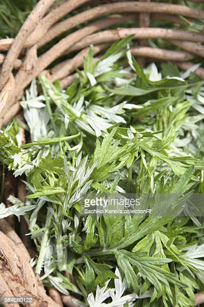 Mugwort in basket