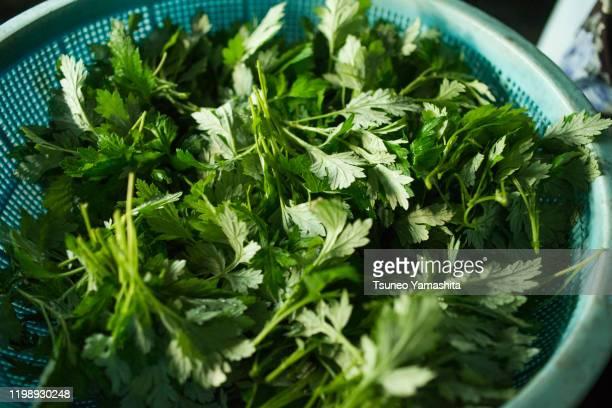 mugwort leaves - japanese mugwort stock pictures, royalty-free photos & images