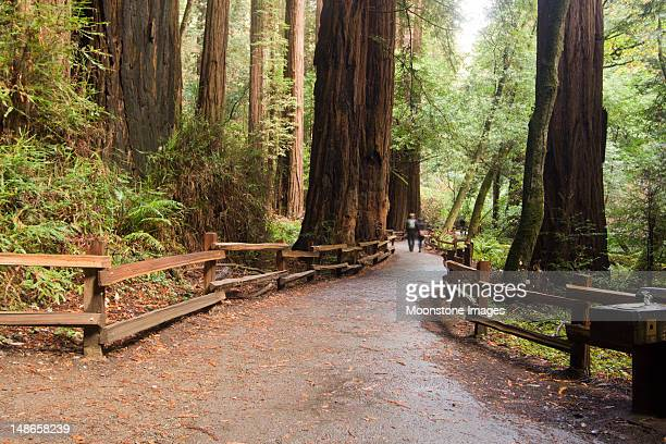 muir woods in marin county, california - national forest stock pictures, royalty-free photos & images